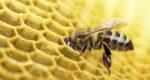 Un nomade au royaume des abeilles
