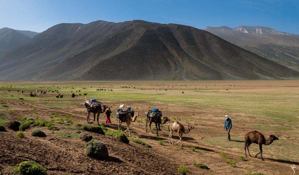 Les caravanes chamelières sont une tradition ancestrale du Maroc