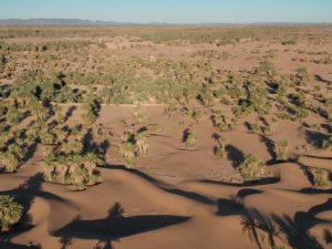 Les oasis du Maroc sont en danger face au réchauffement climatique