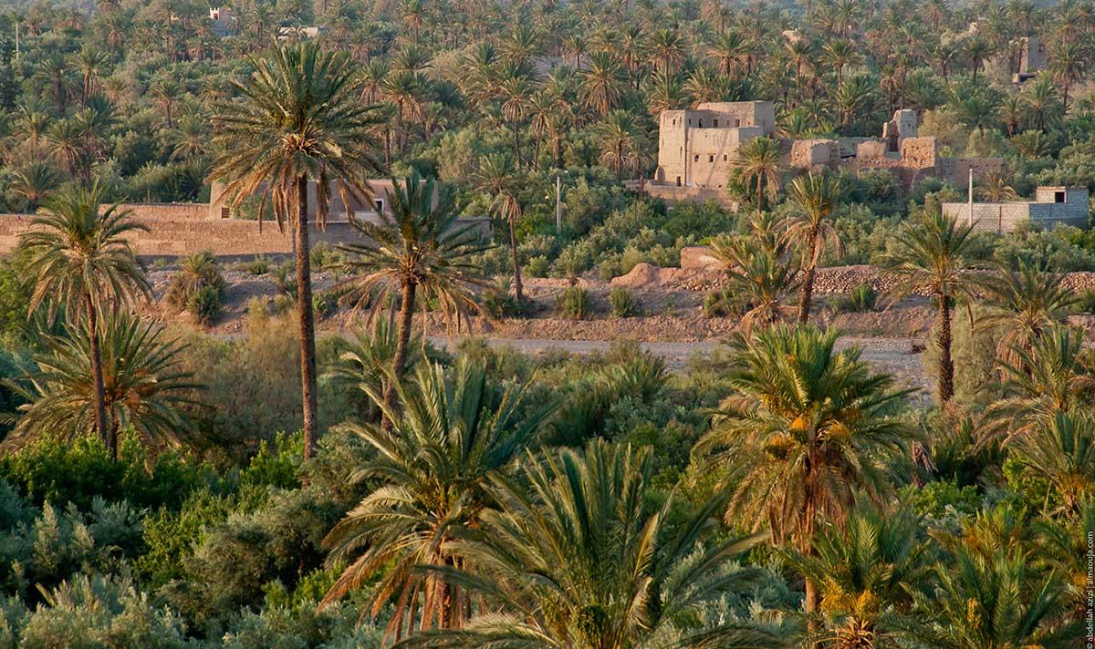 Oasis de Skoura, près d'Ouarzazate