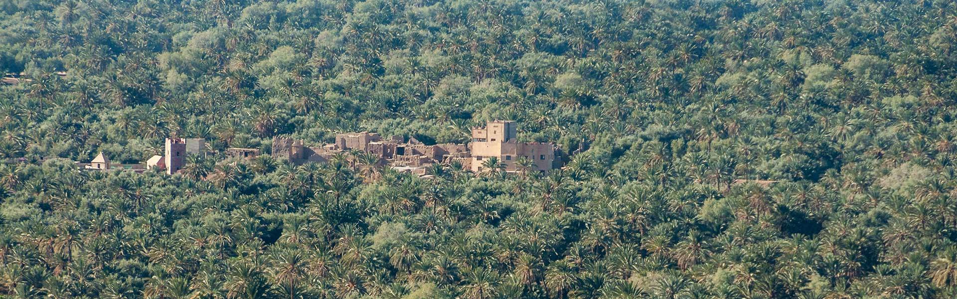 Oasis et palmeraies de la région Sud Est du Maroc